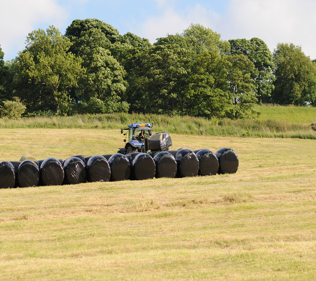 Black Silage Film